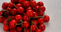 featured_cherries